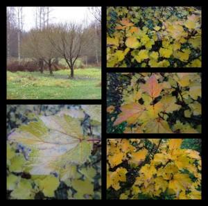 PhototasticCollage-2015-10-26-19-01-40